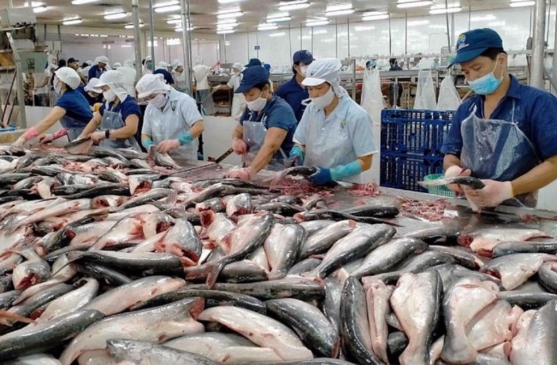 Doanh nghiệp giữ vững thị trường xuất khẩu cá tra.