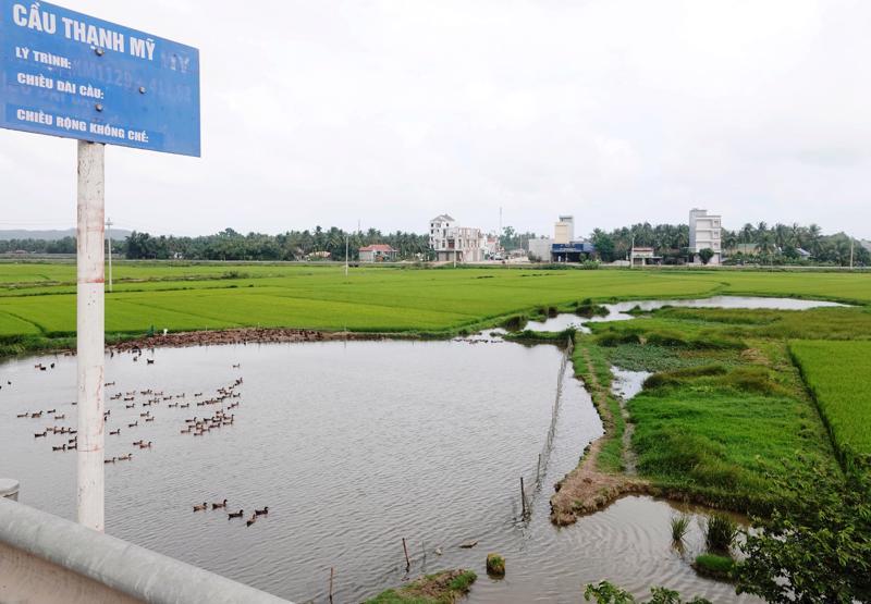 Mất ruộng do thi công Quốc lộ 1 nhưng 6 năm chưa được bồi thương, nông dân Bình Định tiếp tục kiến nghị Bộ Giao thông vận tải xử lý.