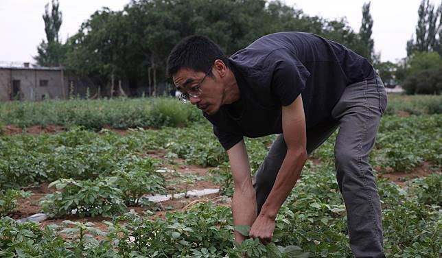 Tiến sĩ, thạc sĩ Trung Quốc đua nhau về quê làm nông nghiệp sạch - Ảnh 2.