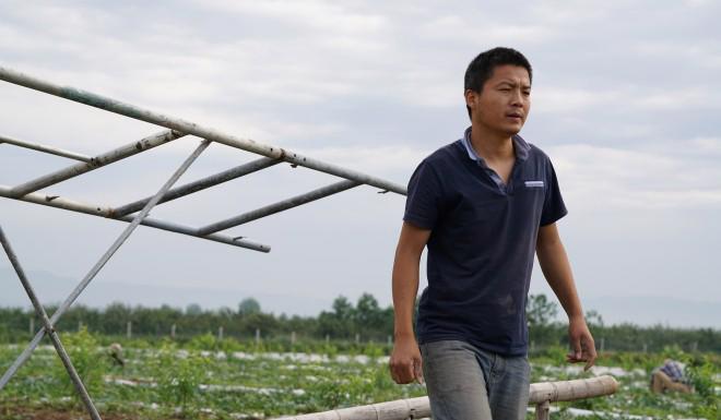 Tiến sĩ, thạc sĩ Trung Quốc đua nhau về quê làm nông nghiệp sạch - Ảnh 1.