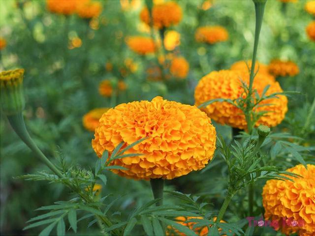 Những cây hoa có thể trồng trong nhà vào mùa đông - Ảnh 1.