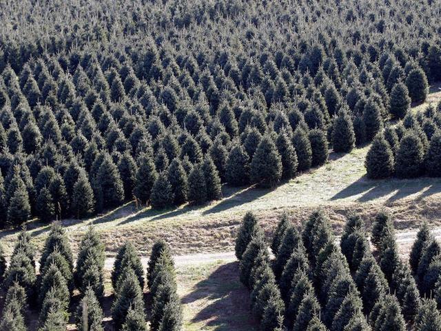 Nước Mỹ: ngắm Giáng sinh muôn màu muôn vẻ - Ảnh 33.