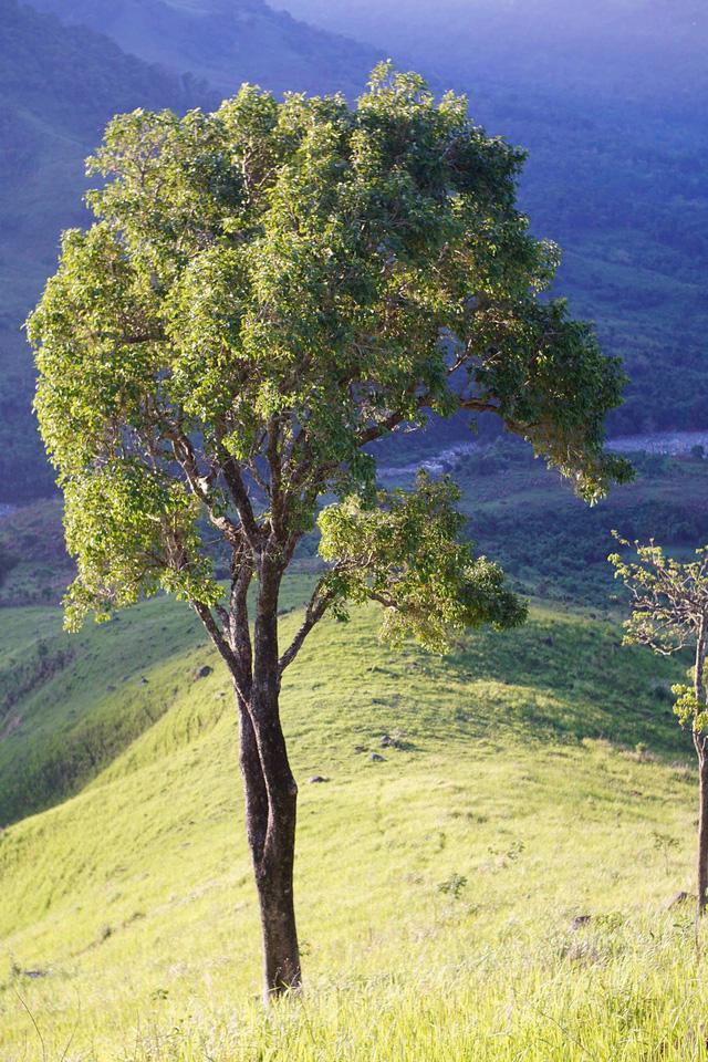 Đến Cam Ranh, nhưng để ngắm… rừng - Ảnh 2.