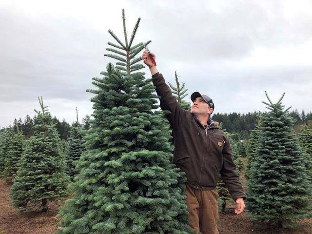 Nước Mỹ: ngắm Giáng sinh muôn màu muôn vẻ - Ảnh 37.