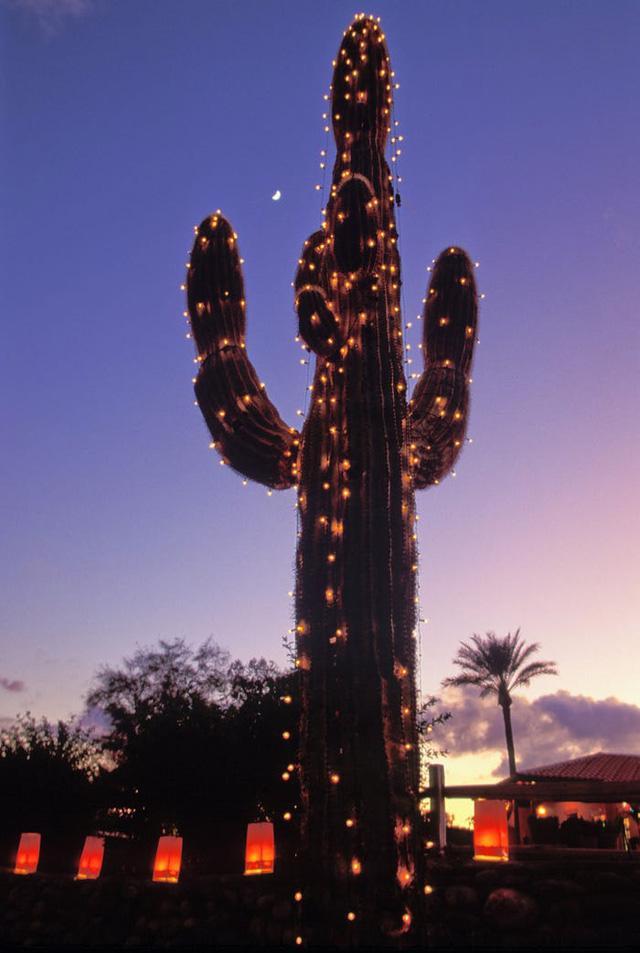 Nước Mỹ: ngắm Giáng sinh muôn màu muôn vẻ - Ảnh 3.