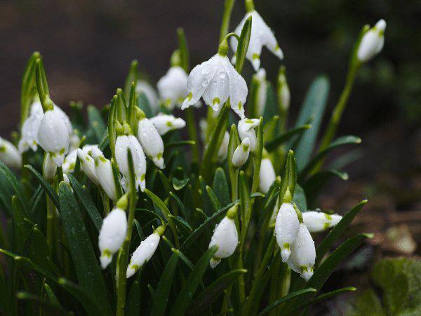 Những cây hoa có thể trồng trong nhà vào mùa đông - Ảnh 4.