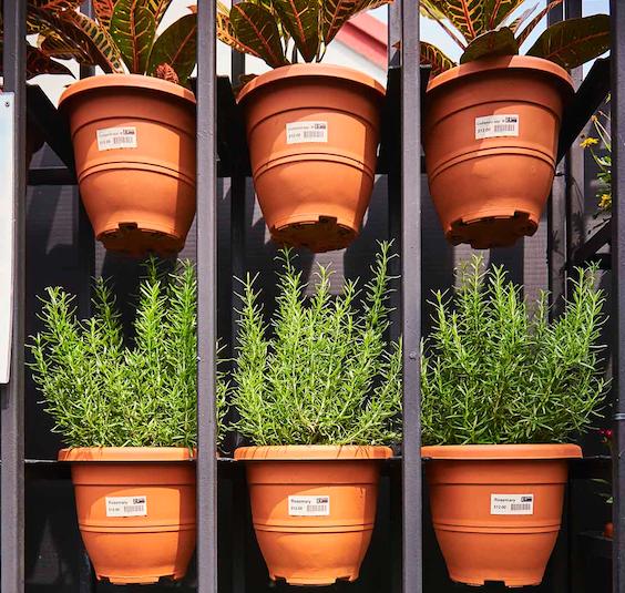 7 cây cảnh phù hợp để trồng trong nhà - Ảnh 2.
