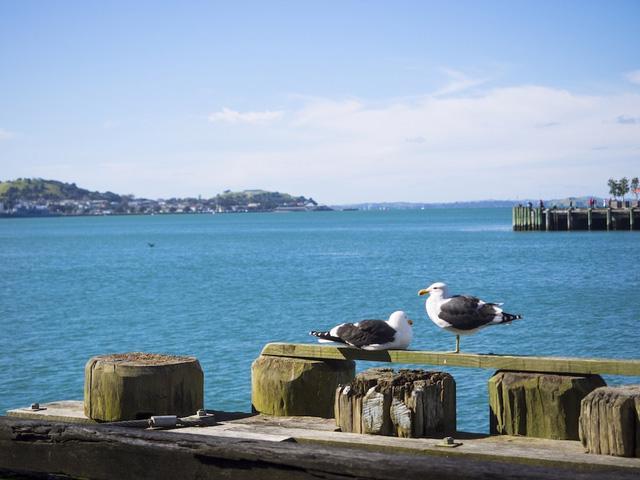 Auckland - thành phố đáng sống thứ 3 trên thế giới - Ảnh 9.