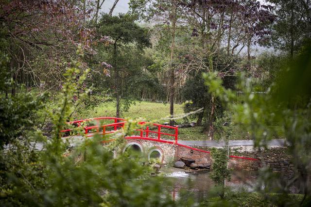 Alba Wellness Resort: sống cùng thiên nhiên - Ảnh 4.