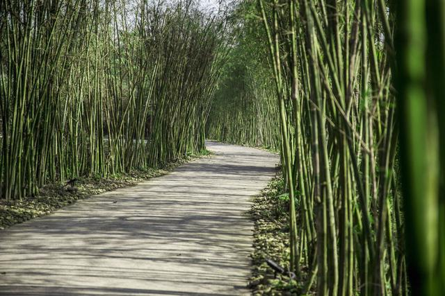 Alba Wellness Resort: sống cùng thiên nhiên - Ảnh 5.