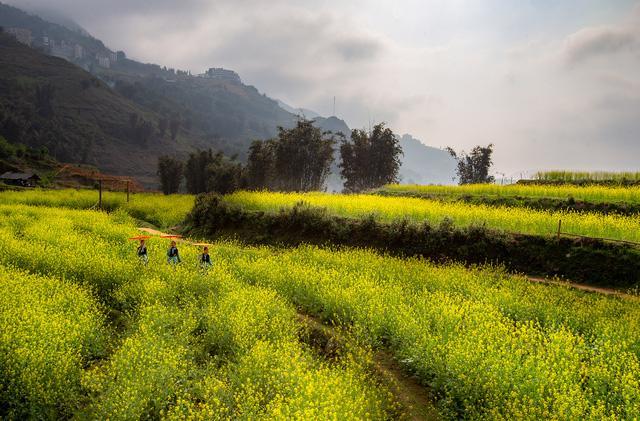 Muốn nghỉ hè trên núi, hãy đến với Sa Pa - Ảnh 2.