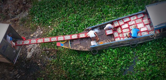Thăm làng bè Châu Đốc mùa nước nổi - Ảnh 5.