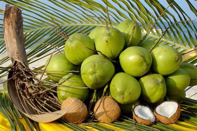 Trái dừa – công dụng tuyệt vời cho sức khỏe - Ảnh 4.
