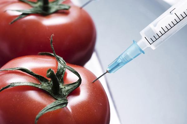 Nỗi lo thực phẩm biến đổi gen - Ảnh 3