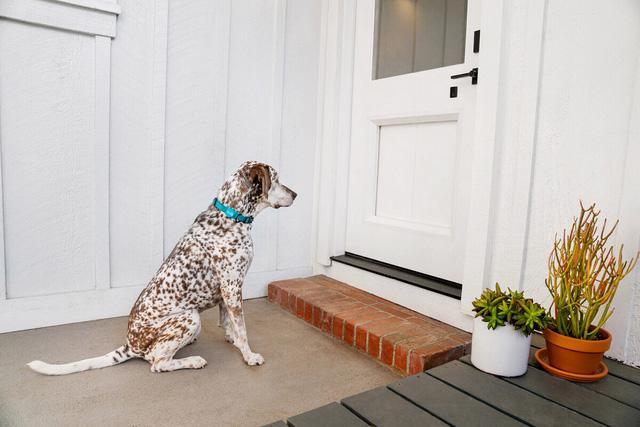 Cửa thông minh cho nhà có thú cưng - Ảnh 2.