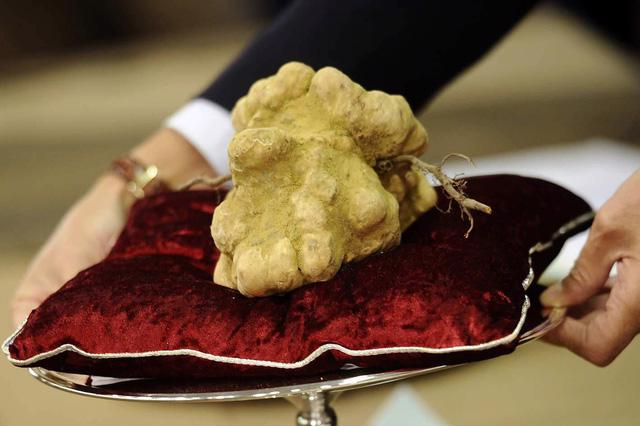 Truffle – loại nấm đắt như kim cương - Ảnh 4.