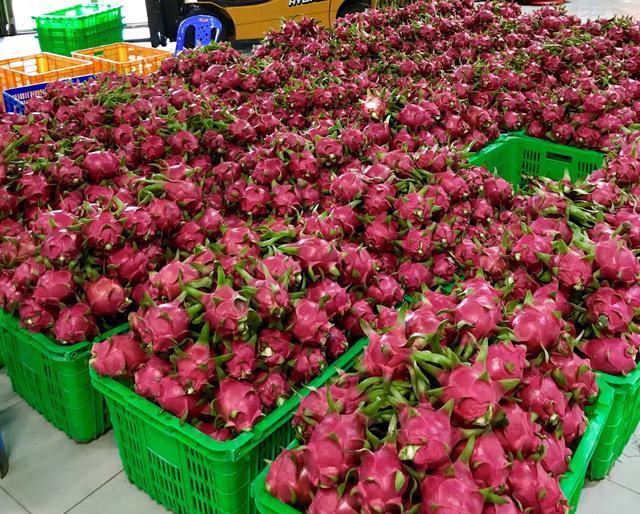 Nếm thanh long Bình Thuận thỏa thích tại MM Mega Market - Ảnh 2.