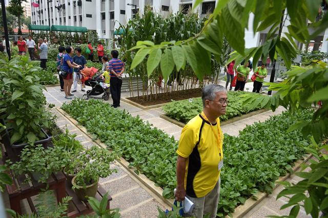 Xu hướng vườn rau cộng đồng tại Singapore - Ảnh 6.
