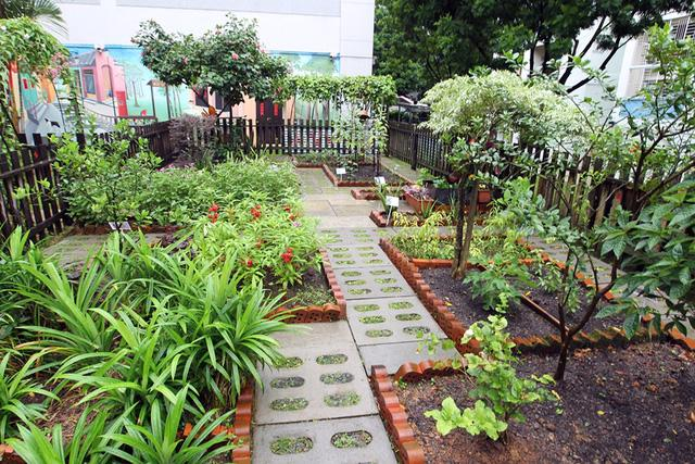 Xu hướng vườn rau cộng đồng tại Singapore - Ảnh 7.