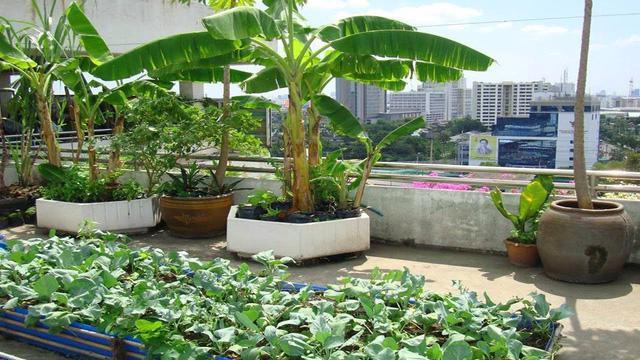 Xu hướng vườn rau cộng đồng tại Singapore - Ảnh 2.