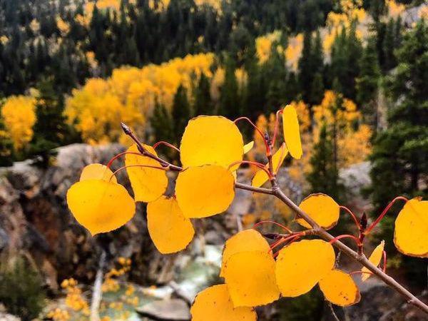 Ngắm mùa thu kỳ diệu trên đỉnh Rocky Mountain - Ảnh 8.