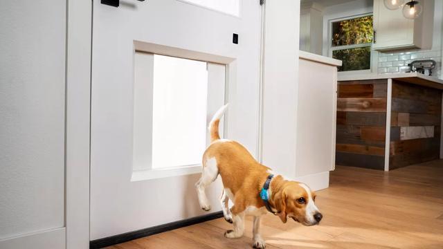 Cửa thông minh cho nhà có thú cưng - Ảnh 1.