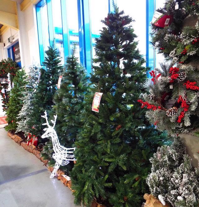 Thị trường cây thông Noel: cây thật giá cao vẫn đắt khách - Ảnh 3.