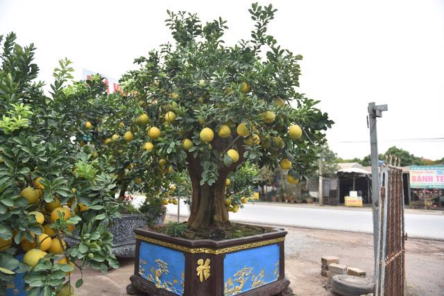 Chậu bưởi bonsai hút khách dịp cận Tết - Ảnh 5.