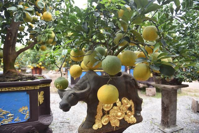 Chậu bưởi bonsai hút khách dịp cận Tết - Ảnh 1.