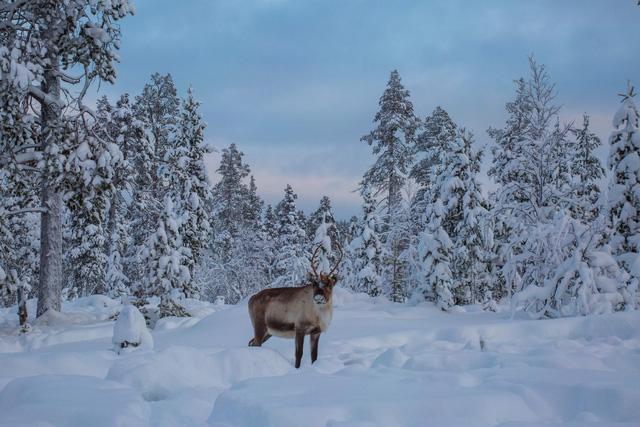 Lapland: nơi lý tưởng nhất để đón Giáng sinh tuyết trắng - Ảnh 6.