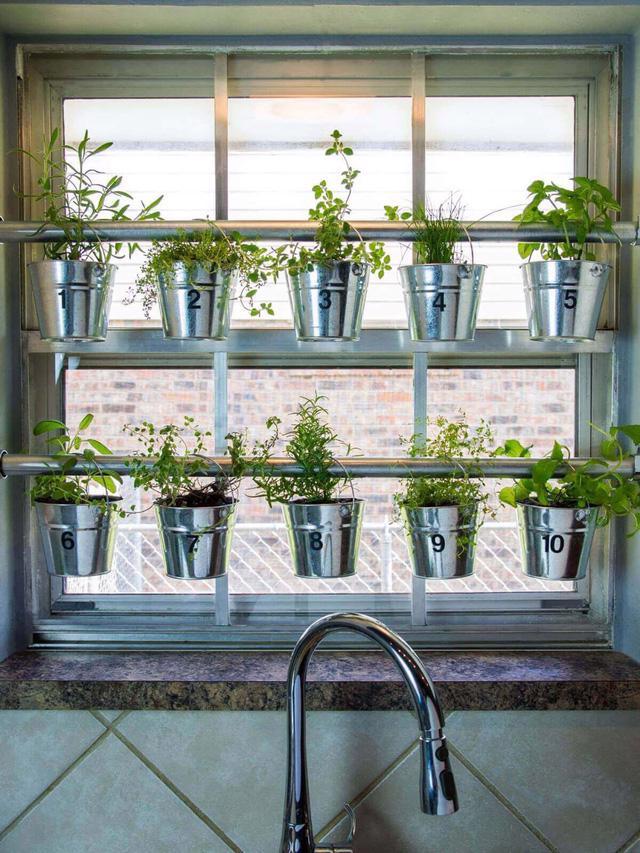 Một khu vườn ngay tại cửa sổ - Ảnh 2.