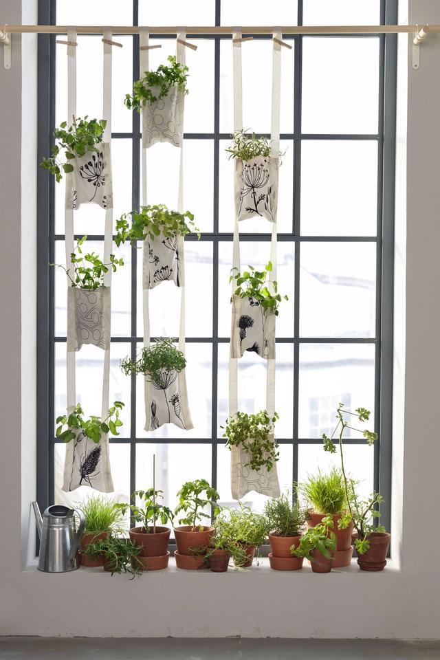 Một khu vườn ngay tại cửa sổ - Ảnh 8.