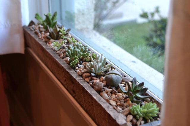 Một khu vườn ngay tại cửa sổ - Ảnh 5.