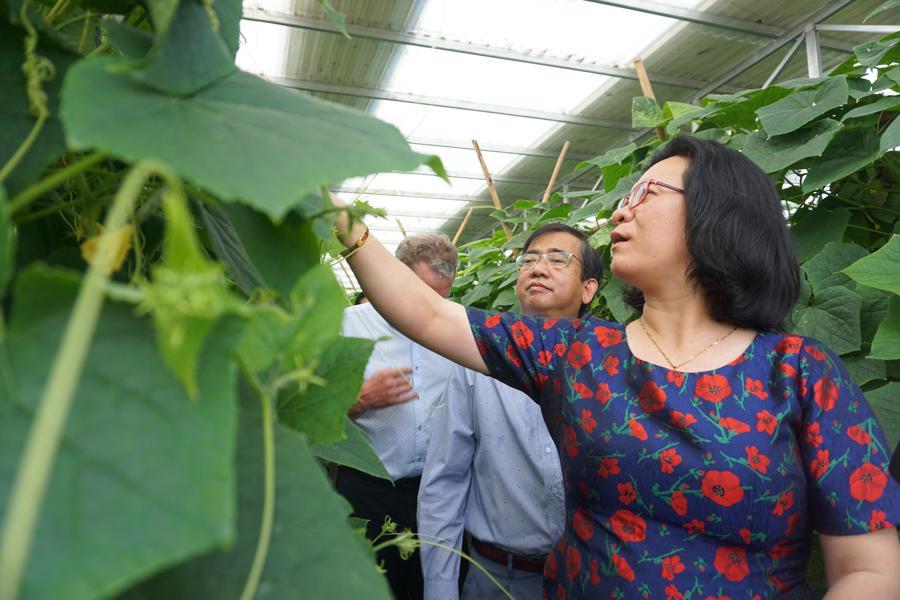 Thử nghiệm kết hợp sản xuất nông nghiệp và điện mặt trời - Ảnh 2.