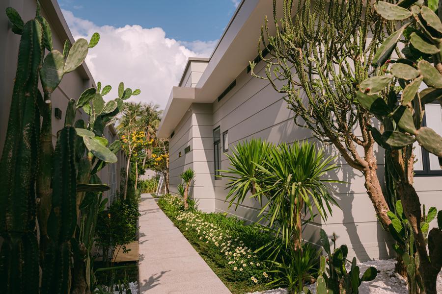 Lối đi xung quanh nhà với xương rồng và các loại cây nhiệt đới.
