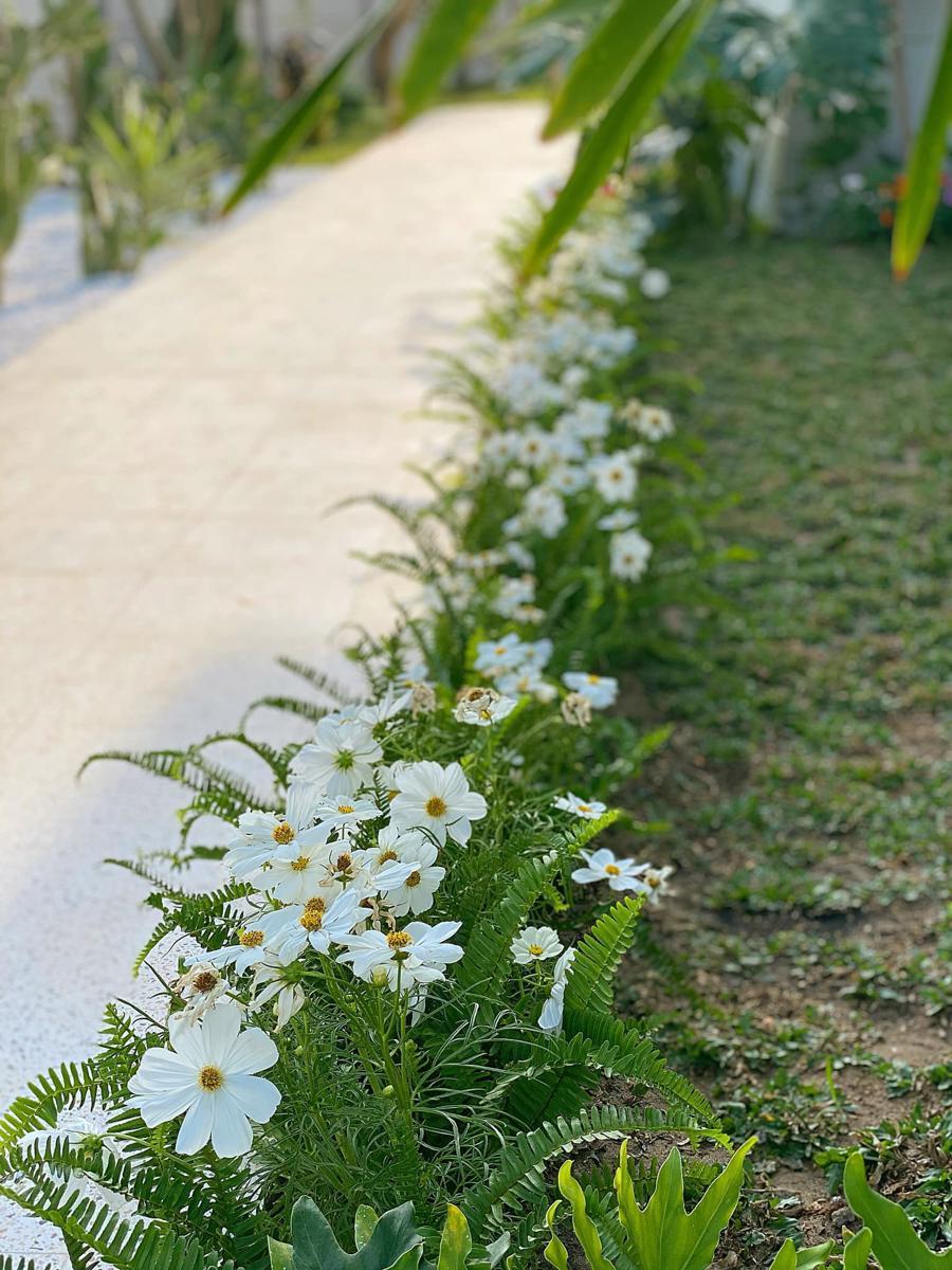 Khu vườn là sự hội tụ của rất nhiều loài hoa, từ hoa dừa, cẩm tú, dàn hồng leo... cho đến chuông vàng, hoàng yến, xương cá...