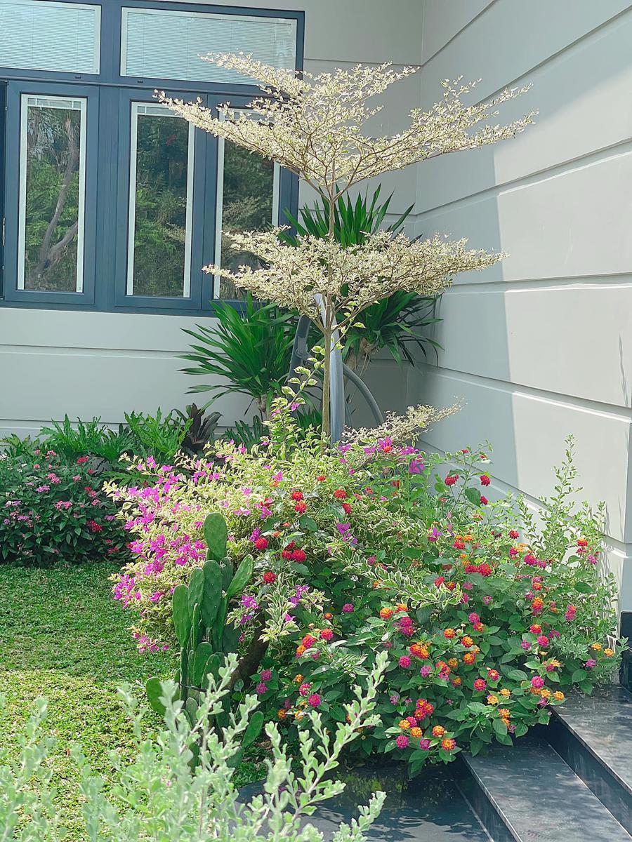 Cây bàng cẩm thạch, hoa giấy cẩm thạch và hoa ngũ sắc được trồng cạnh nhau ngay lối vào nhà.