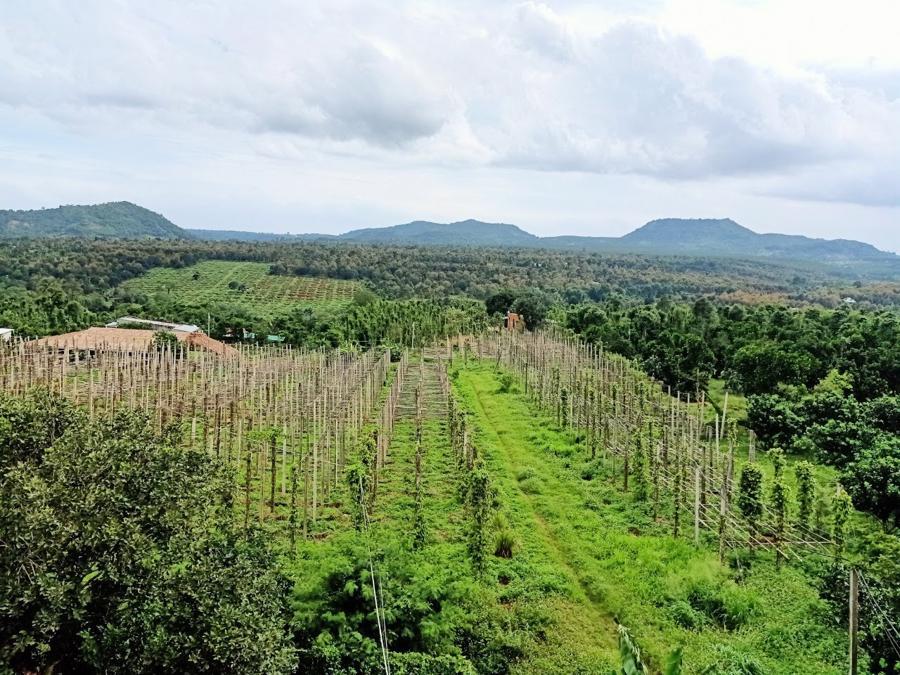 Anh Huy mua những mảnh vườn đầu tiên với mong muốn tìm hiểu, ứng dụng cây cỏ vào lĩnh vực chăm sóc sức khỏe.