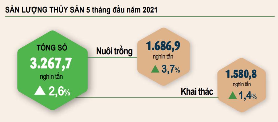 Sản lượng thủy sản tháng 5 ước tính đạt hơn 782 nghìn tấn - Ảnh 1