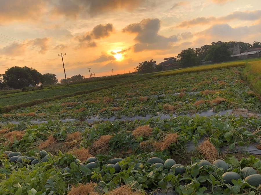 Ngoài vải thiều, Bắc Giang còn có nhiều loại nông sản tiềm năng được thị trường trong và ngoài nước biết đến như dưa hấu, cam, bưởi, chè, nhãn...