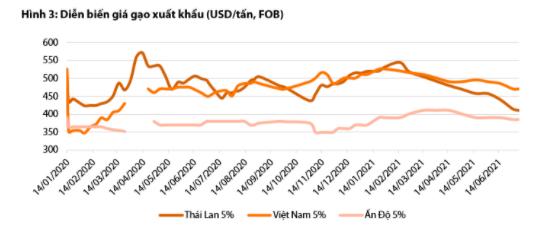 Dự báo giá gạo Việt Nam sẽ giảm mạnh do cạnh tranh với Ấn Độ - Ảnh 3