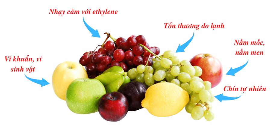 Những yếu tố có thể ảnh hưởng đến chất lượng nông sản trong quá trình vận chuyển, lưu trữ.