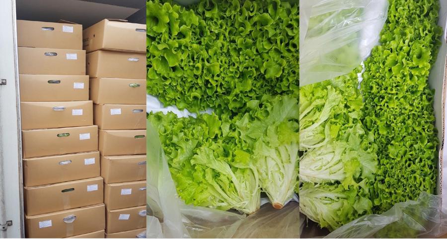 Thời gian bảo quản tăng lên đáng kể, nhờ đó, nhiều loại trái cây, rau củ tươi của Việt Nam có thể xuất khẩu tốt vào thị trường EU bằng đường biển.