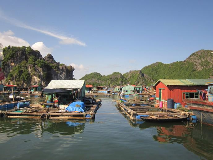 Các hộ dân nuôi trồng thủy sản tại Cái Bèo.