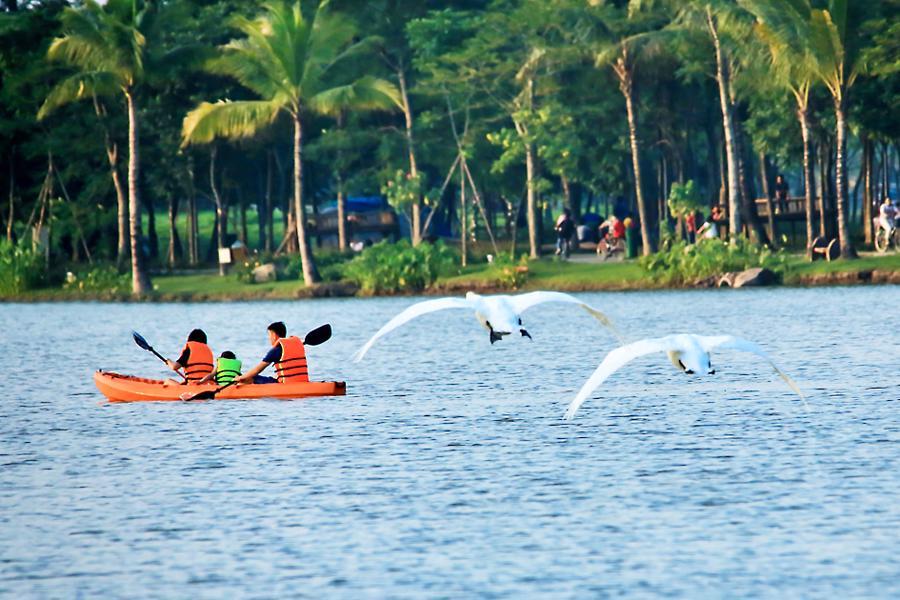 Khu đô thị cách hồ Hoàn Kiếm 14 km có thiên nga, vịt trời đi lại tự do trên đường - Ảnh 3