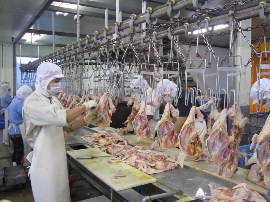 Nếu các hộ nuôi ngừng chăn nuôi, doanh nghiệp sẽ thiếu nguồn nguyên liệu cho việc sản xuất thực phẩm chế biến.