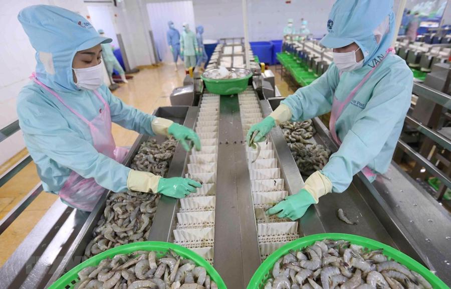 Bên cạnh lĩnh vực chế biến, đại dịch Covid-19 đã làm nuôi trồng thủy sản bị thiệt hại nặng nề nên cần được hỗ trợ để duy trì, tái đầu tư.