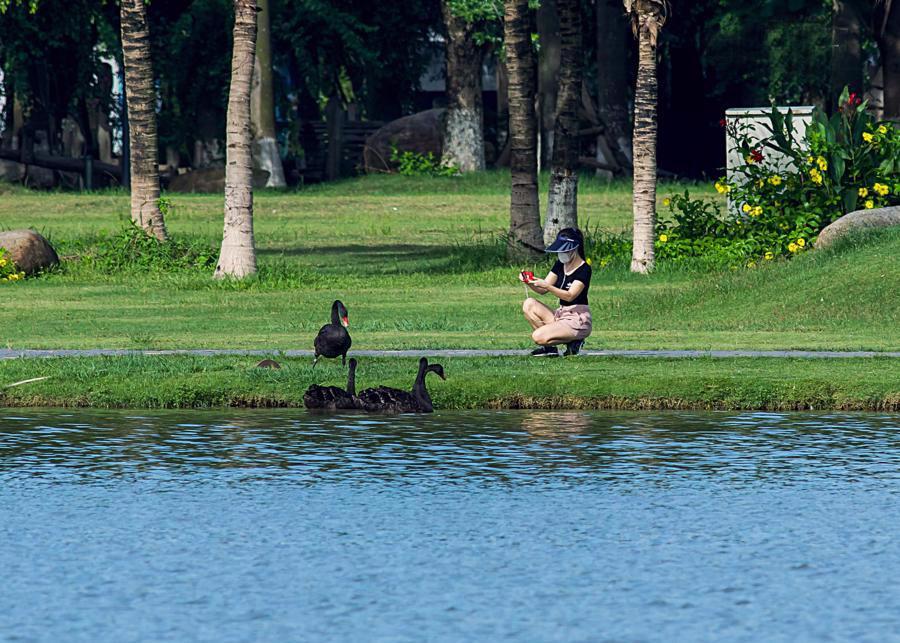 Khu đô thị cách hồ Hoàn Kiếm 14 km có thiên nga, vịt trời đi lại tự do trên đường - Ảnh 2