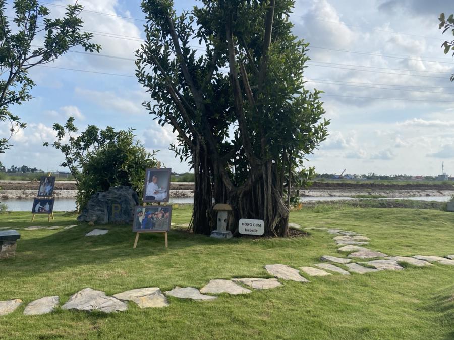 Toàn bộ khuôn viên sa hình được phủ bóng mát bởi 37 cây đa lớn.