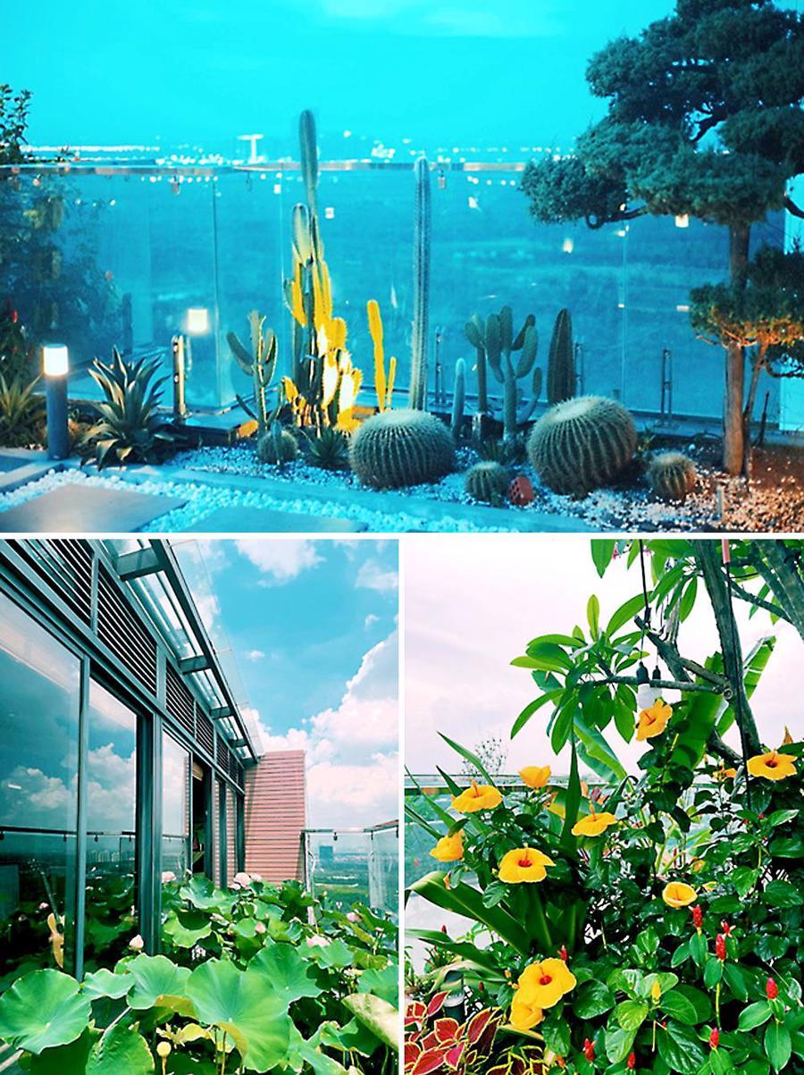 Không gian xanh với đủ loại hoa nở rực rỡ.